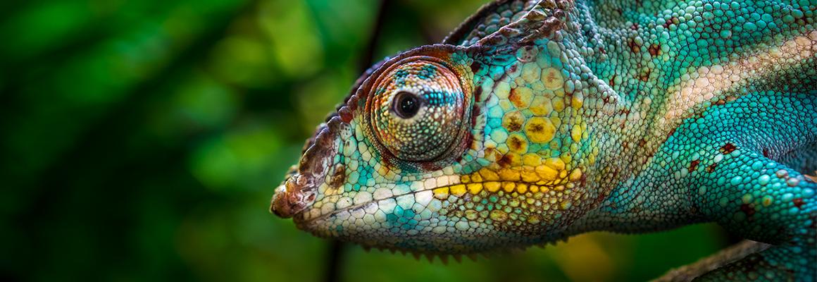 Se l'aggettivo si comporta come un camaleonte - Erickson 2